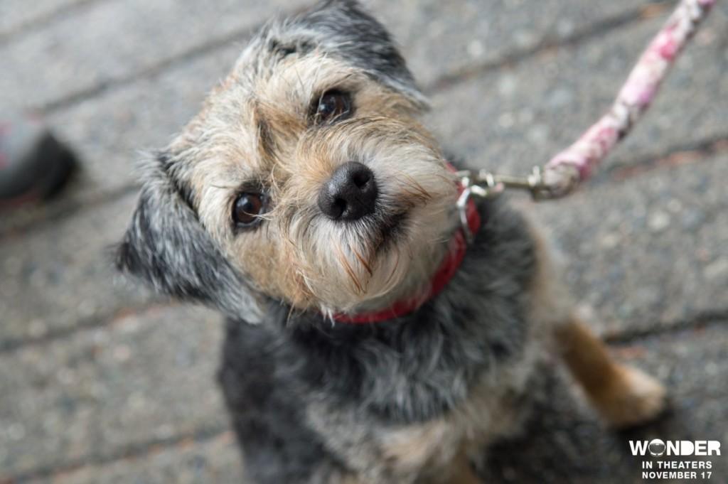 Daisy - cachorrinha de Extraordinário - Criatura fofa de 2017