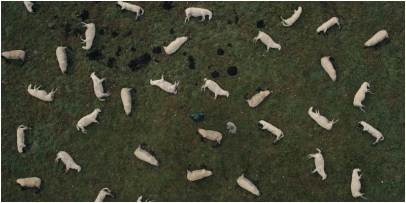 Dark - ovelhas mortas
